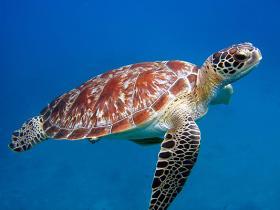 放生海龟十六年后救回儿子一命