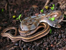 夫人慈爱不杀生 蛇来报恩