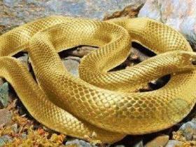 杀蛇的残酷报应