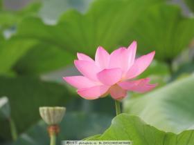 印光大师开示:念佛之法,重在信愿,一定要看,这把往生的条件说透了!